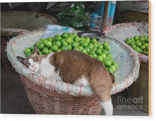Cat Sleeping Among The Limes Wood Print