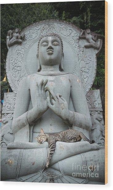 Cat Sleeping On The Lap Buddha Statues. Wood Print