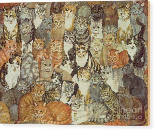 Cat Spread Wood Print