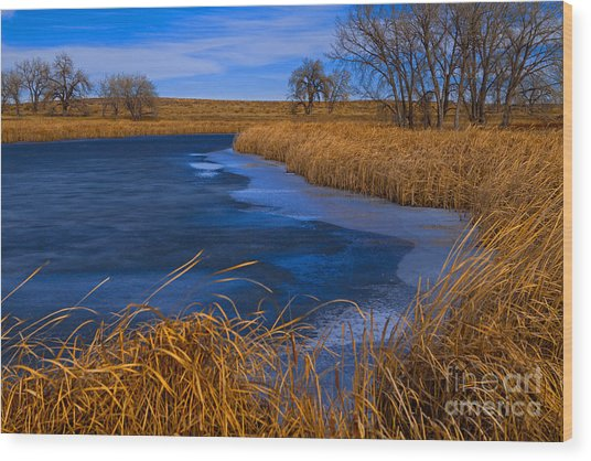 Cat Tails And Ice Wood Print