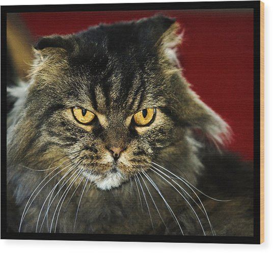 Cat With An Attitude Wood Print