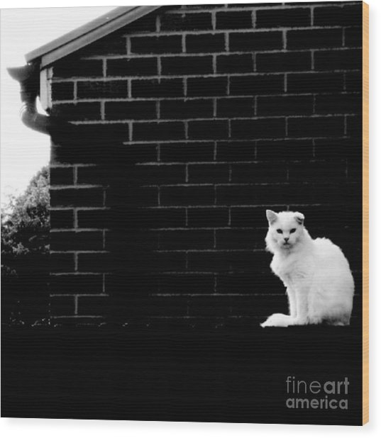 Cat With The Floppy Ear In Black And White Wood Print