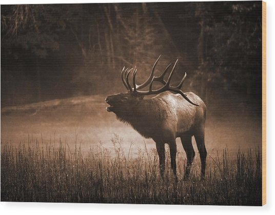 Cataloochee Bull Elk In Sepia Wood Print