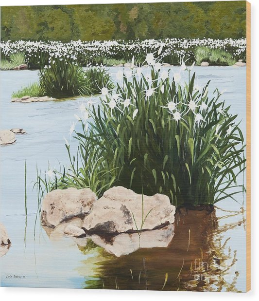 Rocky Shoals Spider Lilly Wood Print by Carla Dabney