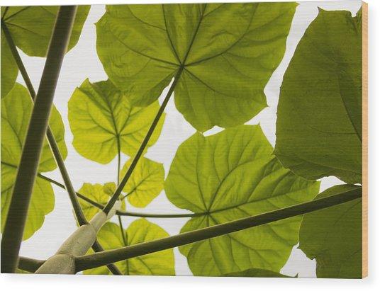 Catawba Umbrella Wood Print
