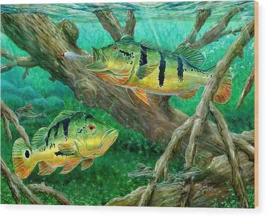 Catching Peacock Bass - Pavon Wood Print