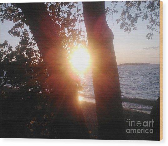 Catching The Sun Wood Print
