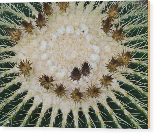Catcus Flower Pla 446 Wood Print