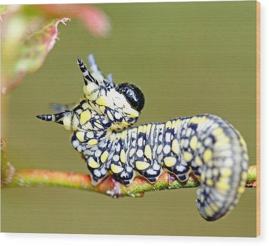 Caterpillar Wood Print by Brian Magnier