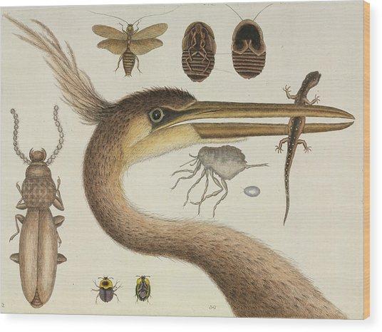 Catesby's The Natural History Of Carolina Wood Print