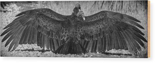 Cathartes Aura Wood Print