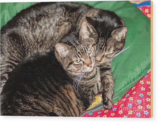 Cats Cuddling Wood Print