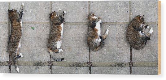 Cat's Life 3 Wood Print