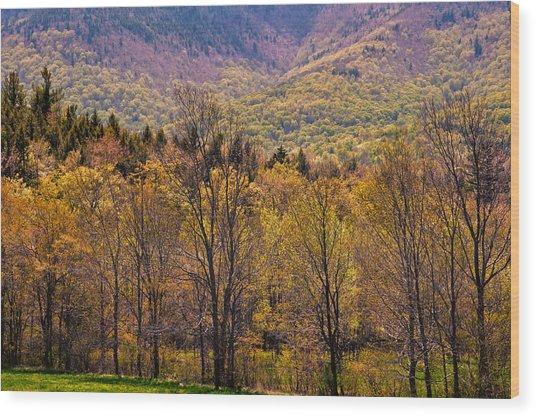 Catskill Color Wood Print