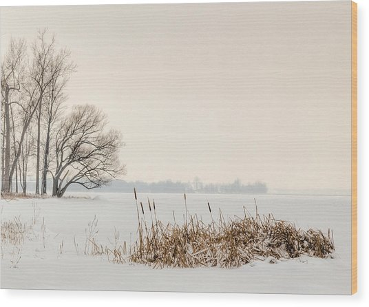 Cattails By The Shore In Winter Wood Print