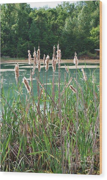Cattails Wood Print by Gayle Melges