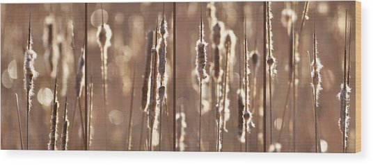 Cattails In The Light Wood Print by Leda Robertson