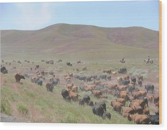 Cattle Drive In The Spring Wood Print by Lee Raine
