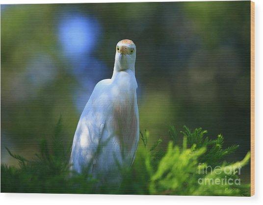 Cattle Egret Eyes Wood Print