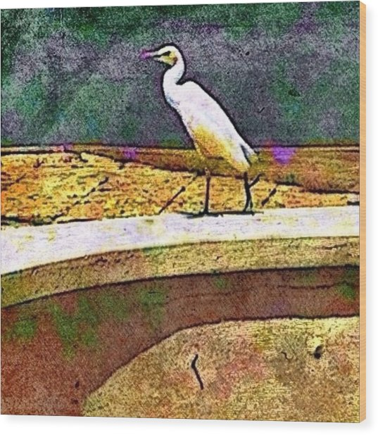 Cattle Egret In Town - Square Wood Print