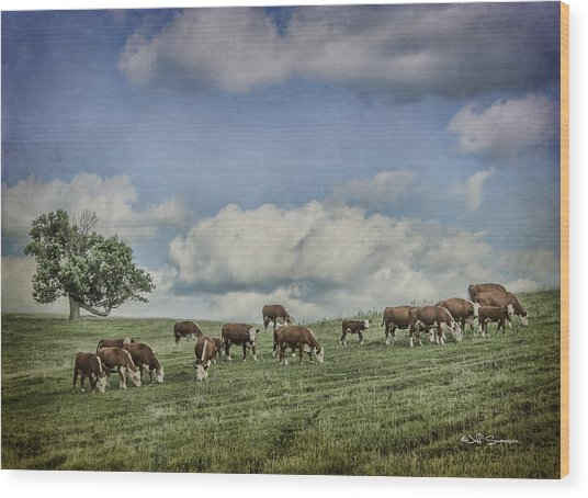 Cattle Grazing Wood Print by Jeff Swanson