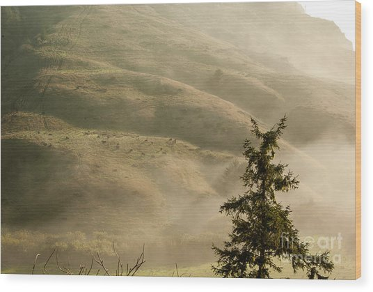 Cattle On Hillside 1.7138 Wood Print by Stephen Parker