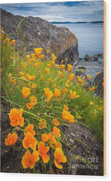 Cattle Point Poppies Wood Print