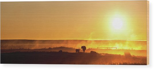 Cattle Silhouette Panorama Wood Print by Imaginegolf