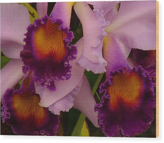 Cattleya Frills Wood Print