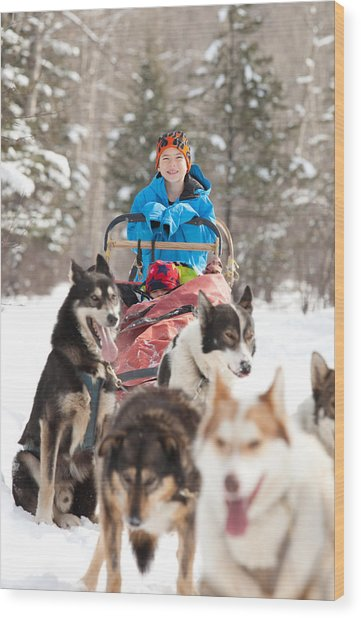Caucasian Child Sits In Siberian Husky-drawn Sled Wood Print by ImagineGolf