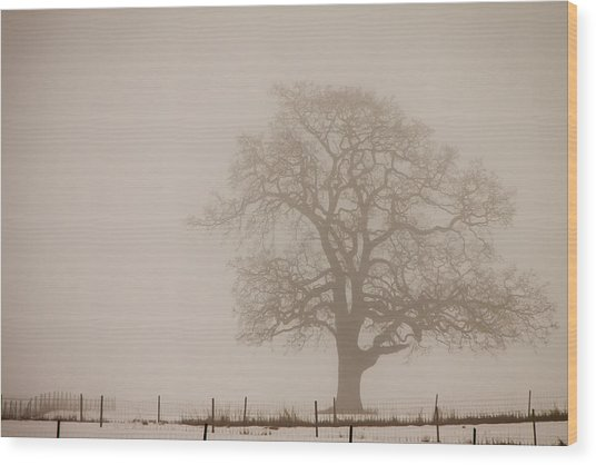 Caught In The Fog Wood Print