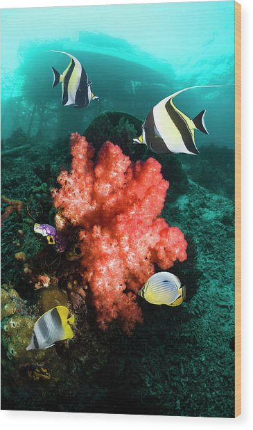 Ccoral Reef With Fish Wood Print