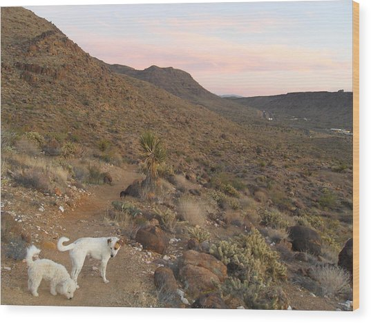 Ceaser, Mocha, And Chico In The Cerbat Mountains Wood Print by James Welch