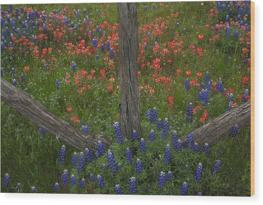 Cedar Fence In Llano Texas Wood Print