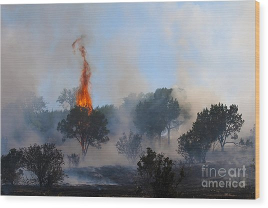 Cedar Fire Wood Print