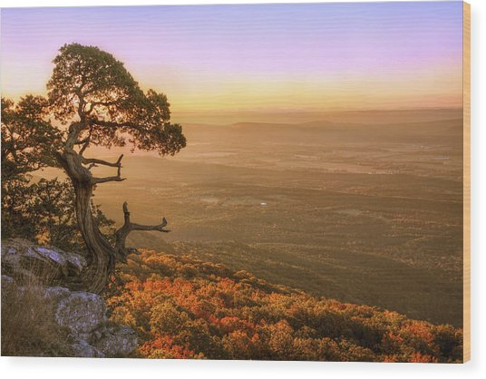 Cedar Tree Atop Mt. Magazine - Arkansas - Autumn Wood Print