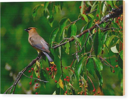 Cedar Waxwing Wood Print