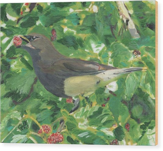 Cedar Waxwing Eating Mulberry Wood Print