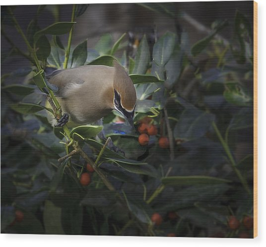 Cedar Waxwings  2012-2 Wood Print