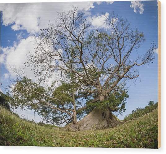 Ceiba Wood Print by Carl Engman