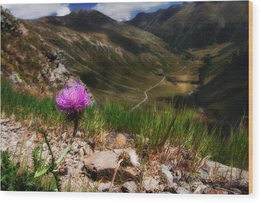 Centaurea Wood Print