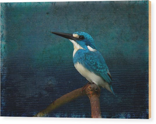 Cerulean Kingfisher Blue Alcedo Coerulescens Wood Print