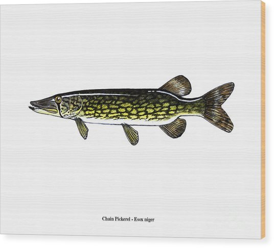 Chain Pickerel Wood Print