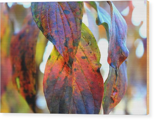 Changing Leaves Wood Print by Dorothy Hall