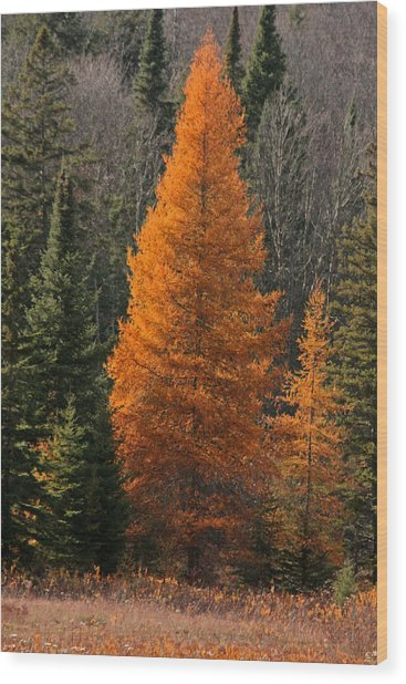 Changing Of The Seasons Wood Print by Kathy  Kujala