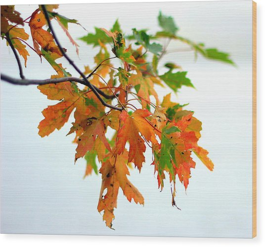Wood Print featuring the photograph Changing Seasons by Viviana  Nadowski