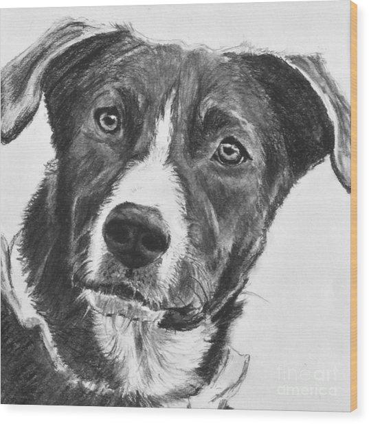 Charcoal Dog Shepherd Wood Print