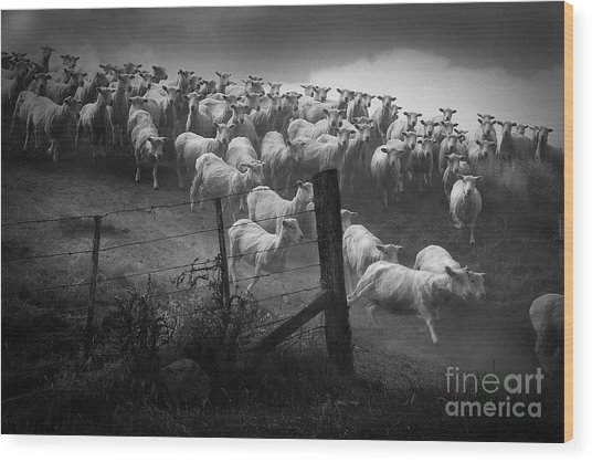 Charging The Gate In Black And White Wood Print
