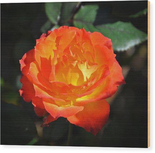 Charisma Rose Wood Print