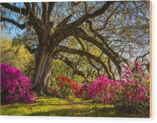 Charleston Sc Magnolia Plantation - Southern Hospitality Wood Print